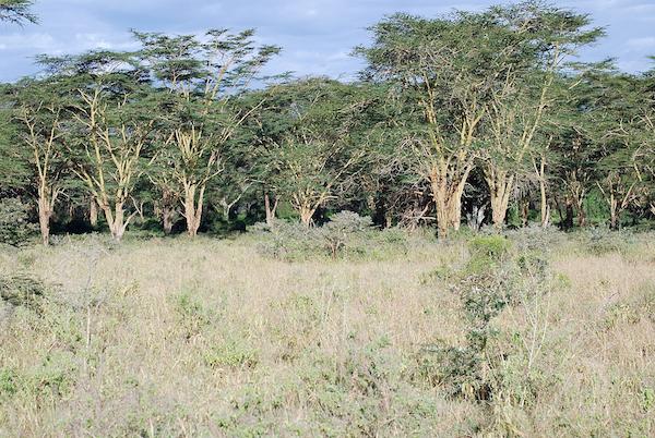 Finde den Leoparden!